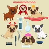 Hundepflegensalon Werkzeuge für das Pflegen Netter Pugwelpe Stockfoto