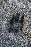 Hundepfotenabdruck ist- auf dem Strand stockfotografie