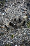 Hundepfotenabdruck ist- auf dem Strand lizenzfreie stockfotos