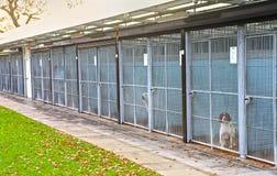 Hundepfund Stockfotografie