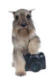 Hundephotograph Lizenzfreie Stockfotografie