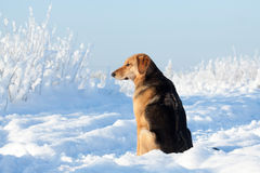 Hundeporträt Lizenzfreies Stockfoto