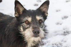 Hundeporträt auf dem Schneehintergrund lizenzfreies stockbild
