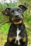 Hundeporträt im Sommer Lizenzfreies Stockfoto