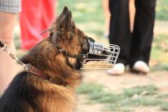 Hundeportrait Lizenzfreies Stockbild