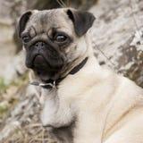 Hundeportrait Stockbild