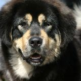Hundeportrait lizenzfreie stockfotos