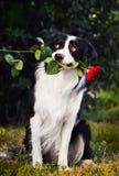 Hundeportrait mit Blume Stockbilder