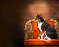 Hundeprofil-Porträt Stockbilder