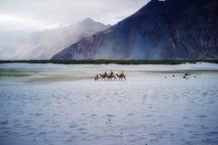 Hunder Sand Dunes of Nubra Valley Stock Photography