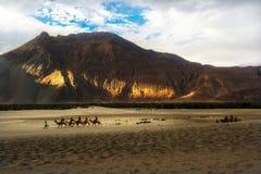 Hunder Sand Dunes of Nubra Valley Stock Image