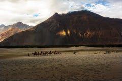 Hunder Sand Dunes of Nubra Valley Stock Photo