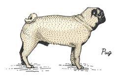 Hunderasse graviert, Hand gezeichnete Vektorillustration in Holzschnitt scratchboard Art, Weinlesespezies vektor abbildung