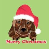 Hunderassedachshund Lizenzfreie Stockfotografie