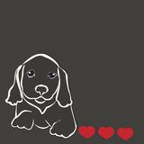 Hunderassedachshund Lizenzfreie Stockfotos
