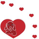 Hunderassedachshund Stockbilder