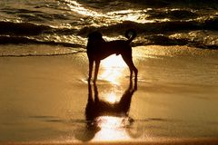 Hundereflexion Lizenzfreie Stockfotografie