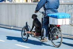 Hundereiten auf einem Fahrrad Lizenzfreie Stockfotos