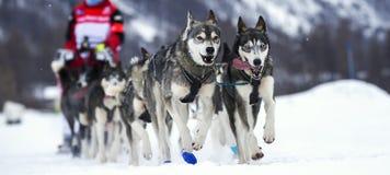 Hunderennen Lizenzfreie Stockbilder