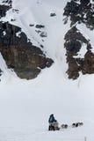 Hunderodelndes Team auf Schnee Lizenzfreies Stockfoto