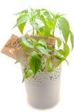 Hundert kanadische Dollarscheine lizenzfreie stockfotos