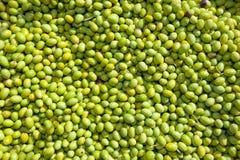 Hunderte der frisch ausgewählten grünen Oliven Stockbilder