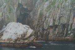 Hunderte von den Vögeln an der Chiswell-Inselkrähenkolonie im Nationalpark Kenai-Fjorde in Alaska stockbild