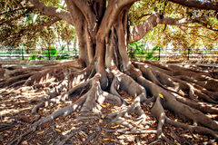 Hundertjähriger Baum Lizenzfreies Stockbild