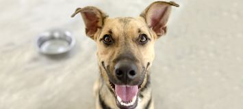 Hundeschüssel glücklich stockfotos