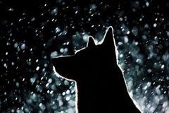 Hundeschattenbild in den Scheinwerfern lizenzfreie stockfotos