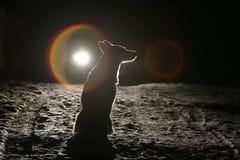 Hundeschattenbild in den Scheinwerfern Stockbilder