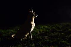 Hundeschattenbild nachts Lizenzfreies Stockfoto