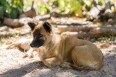 Hundeschauen Stockfotos