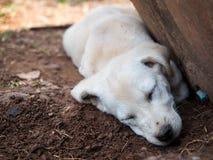 Hundeschlaf Stockbilder