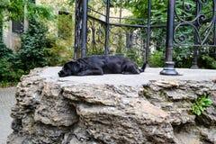 Hundeschlaf Stockfoto