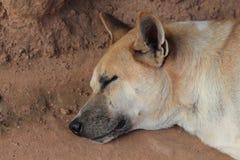 Hundeschlaf auf Sand stockfotografie