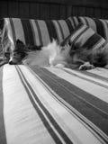 Hundeschlafen Stockbild