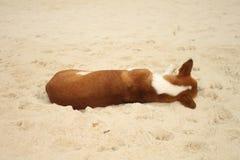 Hundeschlafende Rückseite auf Sand Lizenzfreie Stockbilder
