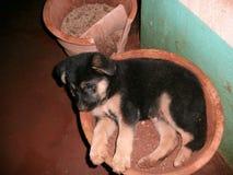 Hundeschlafenhund Lizenzfreies Stockbild
