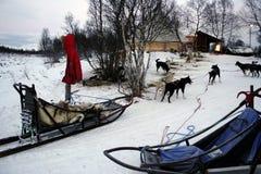 Hundeschlitten Stockfoto