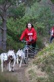 Hundeschlitten, der am SHCGB läuft Lizenzfreies Stockbild