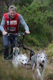 Hundeschlitten, der am SHCGB läuft Lizenzfreie Stockfotos