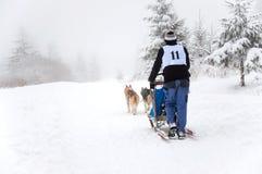 Hundeschlitten mit Schlittenhunden Lizenzfreies Stockbild