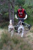 Hundeschlittenlaufen Lizenzfreie Stockbilder