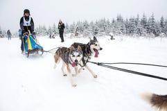 Hundeschlittenrennen Lizenzfreie Stockfotografie
