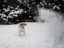 Hundeschneesturm Lizenzfreies Stockfoto