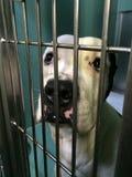 Hundeschutz Lizenzfreie Stockbilder