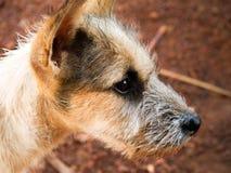 Hundeseitenflächeporträt stockfotos