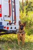 Hundeservice von EMERCOM von Russland Ein Rettungshund Lizenzfreie Stockbilder