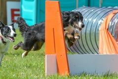 Hundeshow Lizenzfreie Stockbilder
